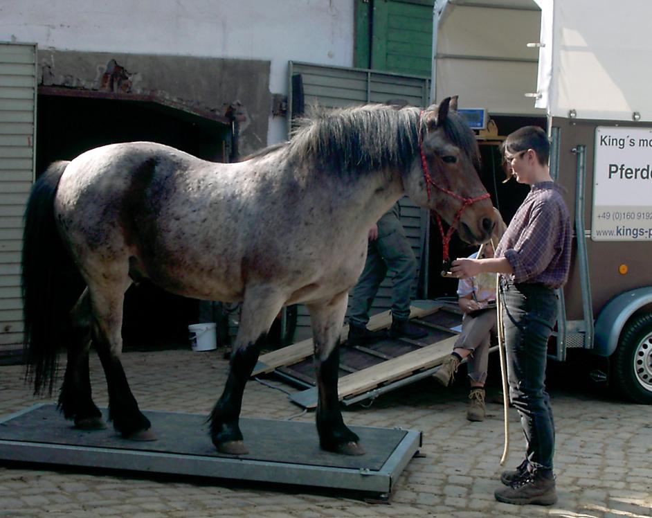 Mobile Pferdewaage: das Gewicht des eigenen Pferdes bestimmen